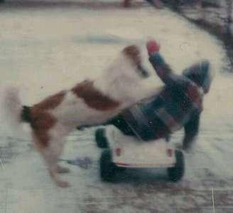 Mike's dog Ziggy